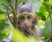 Monkeys In India Steal Coronavirus Blood Samples, Attack Lab Assistant