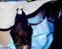 Reported Footage from 2017 Proves That Bats Were Kept in Wuhan Lab, Came Into Close Contact with Scientists