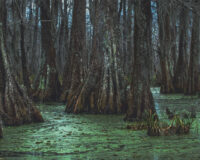 Swamp Search Intensifies as Missing Influencer Confirmed Dead